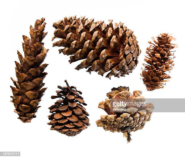 Five pinecones on white