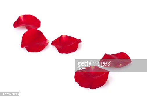Five red rose petals on a white background