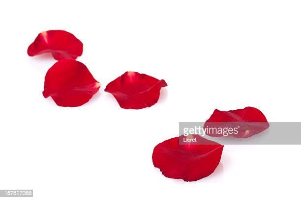 Pétales de Rose avec espace pour copie