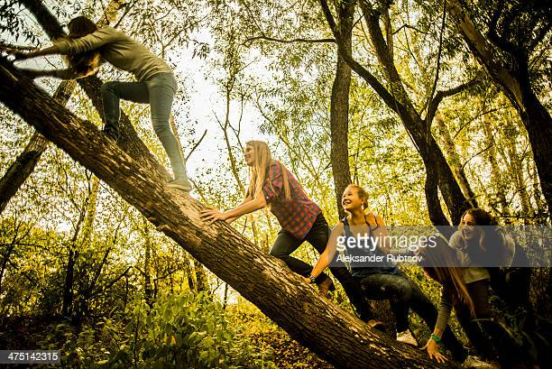 Five young women climbing tree in woods