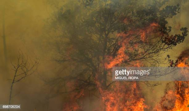 Flames burn a tree during a wildfire in Vale da Ponte Pedrograo Grande on June 20 2017 The huge forest fire that erupted on June 17 2017 in central...