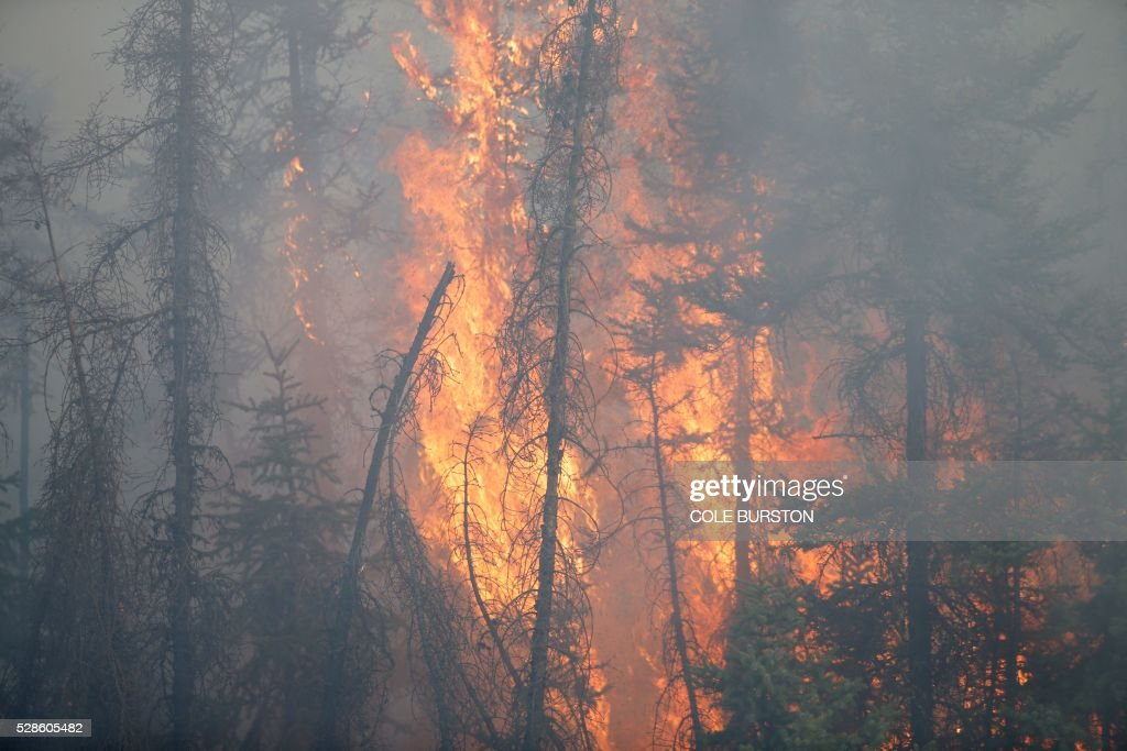 Flames engulf trees along a highway near Fort McMurray, Alberta, on May 6, 2016. Canadian police led convoys of cars through the burning ghost town of Fort McMurray Friday in a risky operation to get people to safety far to the south.In the latest chapter of the drama triggered by monster fires in Alberta's oil sands region, the convoys of 50 cars at a time are driving through the city at about 50-60 kilometers per hour (30-40 miles per hour) TV footage showed. / AFP / Cole Burston