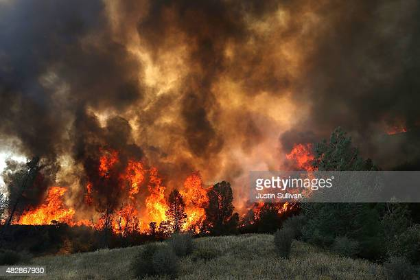 Flames from a backfire operation burn through a grove of trees as firefighters try to head off the Rocky Fire on August 3 2015 near Clearlake...