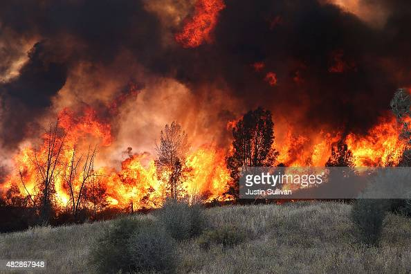 Flames from a backfire operation burns through a grove of trees as firefighters try to head off the Rocky Fire on August 3 2015 near Clearlake...