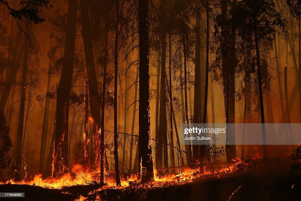 Flames from the Rim Fire consume trees on August 25, 2013 near Groveland, California. The Rim Fire continues to burn out of control and threatens 4,500 homes outside of Yosemite National Park. Over 2,000 firefighters are battling the blaze that has entered a section of Yosemite National Park and is currently 7 percent contained.