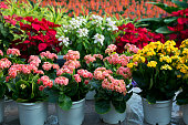 Flaming Katy flowers in pots , Artificial colorful flowers pots, flowers shop,