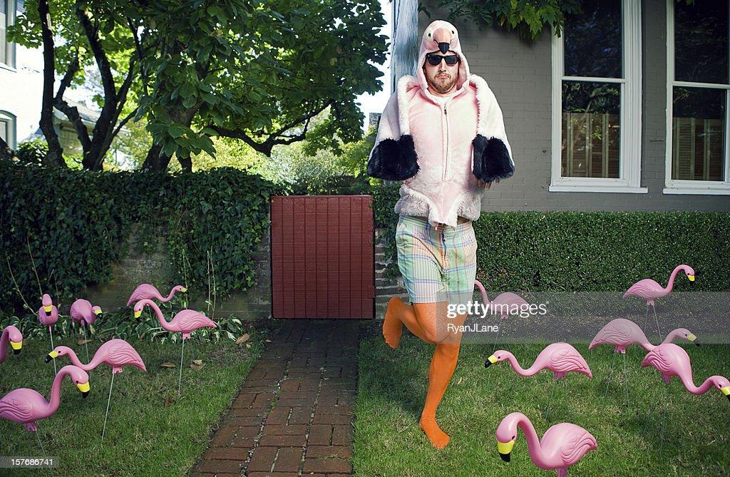 Flamingo Man Lawn : Stock Photo