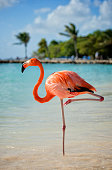 Colourfull flamingo standing on one leg. Holiday island with a pier and some beds out of focus in the background.
