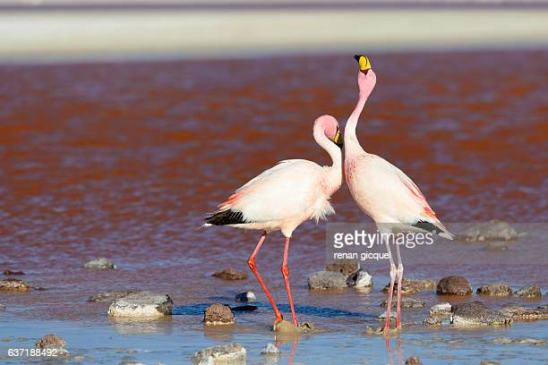 Flamingo #5