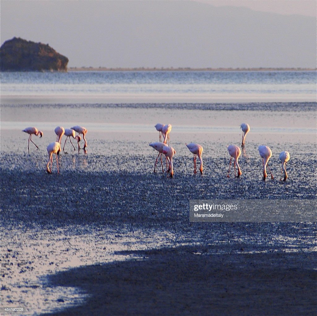 Flamingoes at Lake Natron : Stock Photo