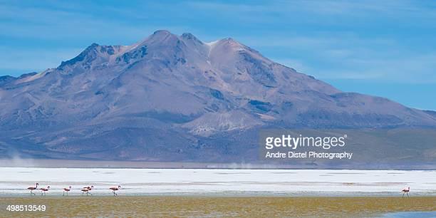 Flamingoes in Salt Flat Salar de Surire, Chile