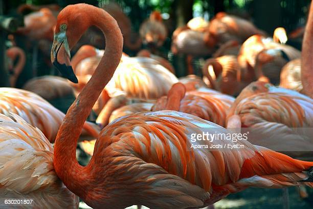 Flamingoes Perching On Field At Forest