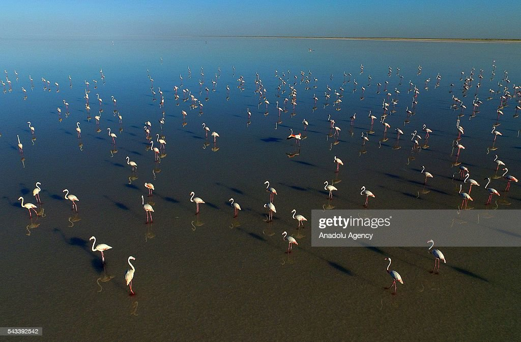 Flamingos are seen after thousands of flamingo chicks have emerged from their nests at Salt Lake, which is home to the biggest flamingo colony in Turkey and the Mediterranean basin, in Aksaray, Turkey on June 28, 2016.