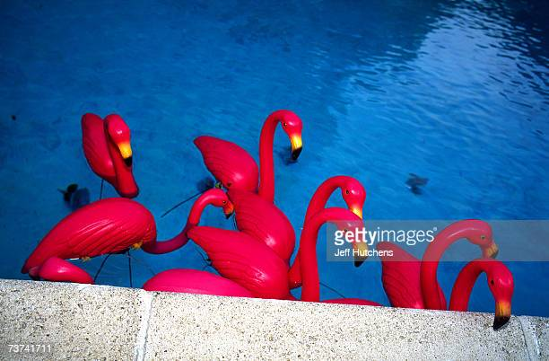 Flamingos dot the landscape of Jill Hunter's house at a party held in honor of the plastic pink flamingo on June 13 2004 in West Newton Massachusetts...