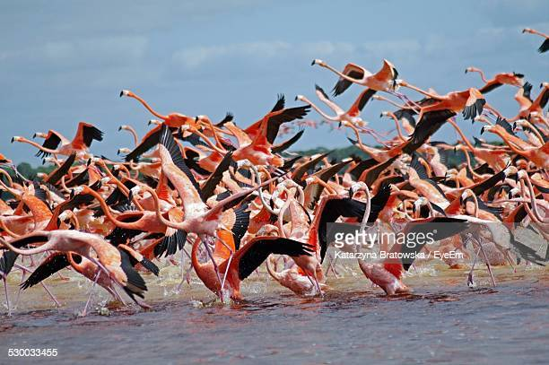 Flamingos Flying Over River Against Sky