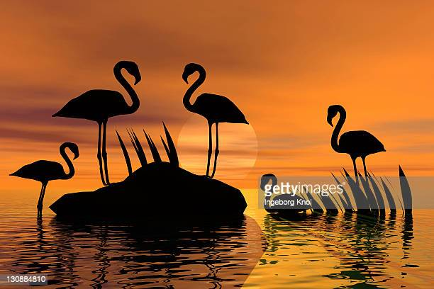 Flamingos in a pond at sunset, silhouette, 3D graphics