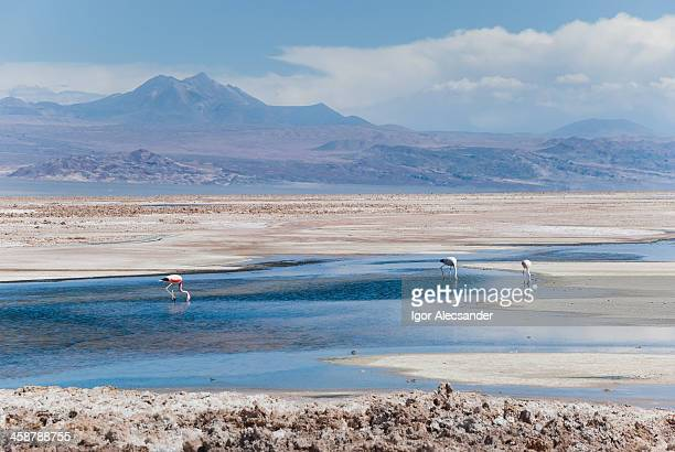 Flamingos National Reserve, Atacama Desert