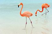 flamingos on a tropical island