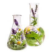 Erlenmeyer flask and flat bottom flask with fresh medical herbs.