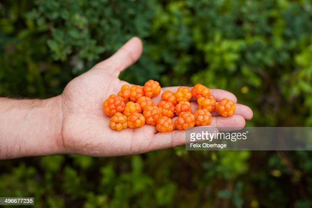 Flat hand with cloudberries