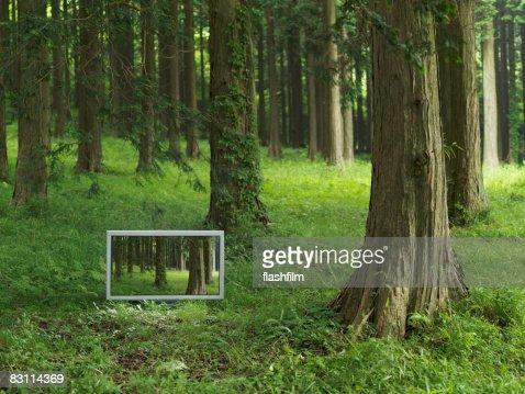 Flachbildfernseher in den forrest : Stock-Foto