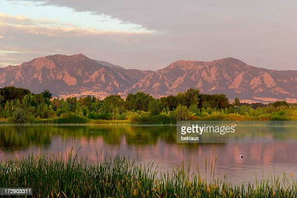 Flatirons at Dawn with Swimming Bird
