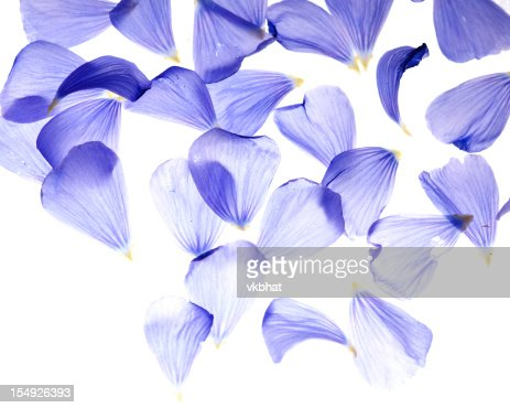 Flax flower petals