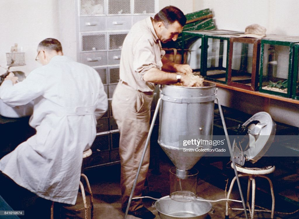 Flea collection techniques practiced during a 1961 San Francisco Plague Study 1961 During the study scientists would collect fleas inoculated with...