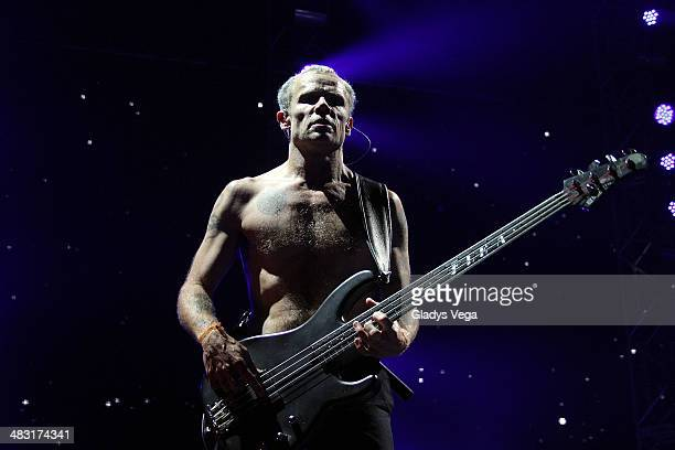 Flea of Red Hot Chili Peppers performs at Coliseo Jose M Agrelot on April 6 2014 in San Juan Puerto Rico