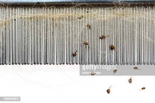 Fleas falling from a dog hair comb