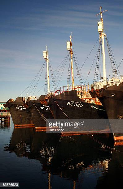 A fleet of fishing boats are moored at Reykjavik harbour on October 21 2004 in Reykjavik Iceland A country of glacial and volcanic geology with a...
