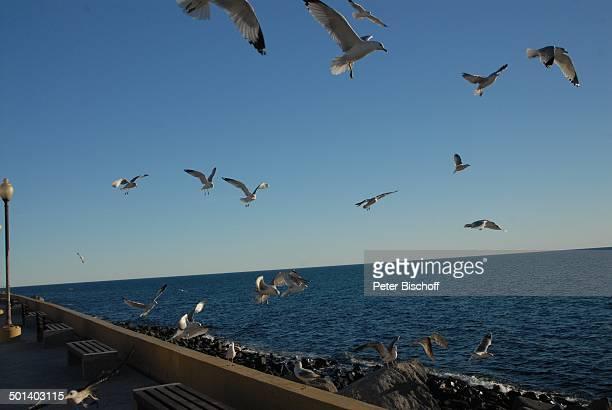 Fliegende Möwen an Promenade Puerto Penasco Sonora Mexico Mittelamerika Vögel Tiere Reise BB DIG PNr 181/2011