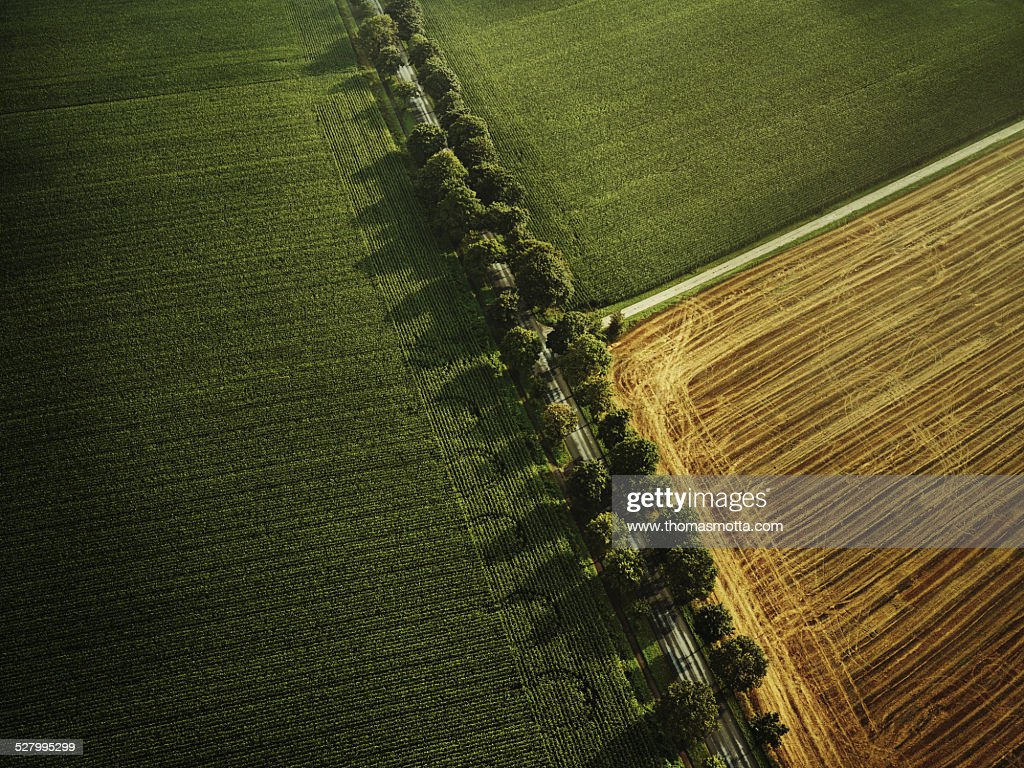 Flight over a field with dirt road and avenue