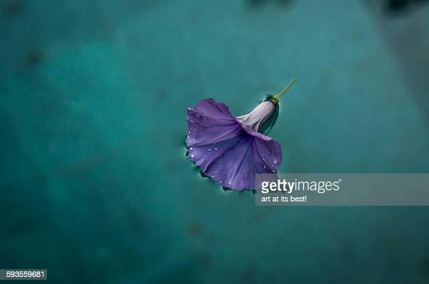 Floating flower