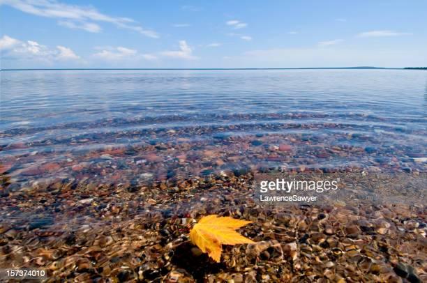 floating maple leaf, Lake Superior