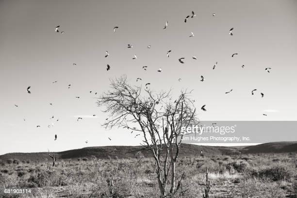 Flock of Birds Circling a Tree