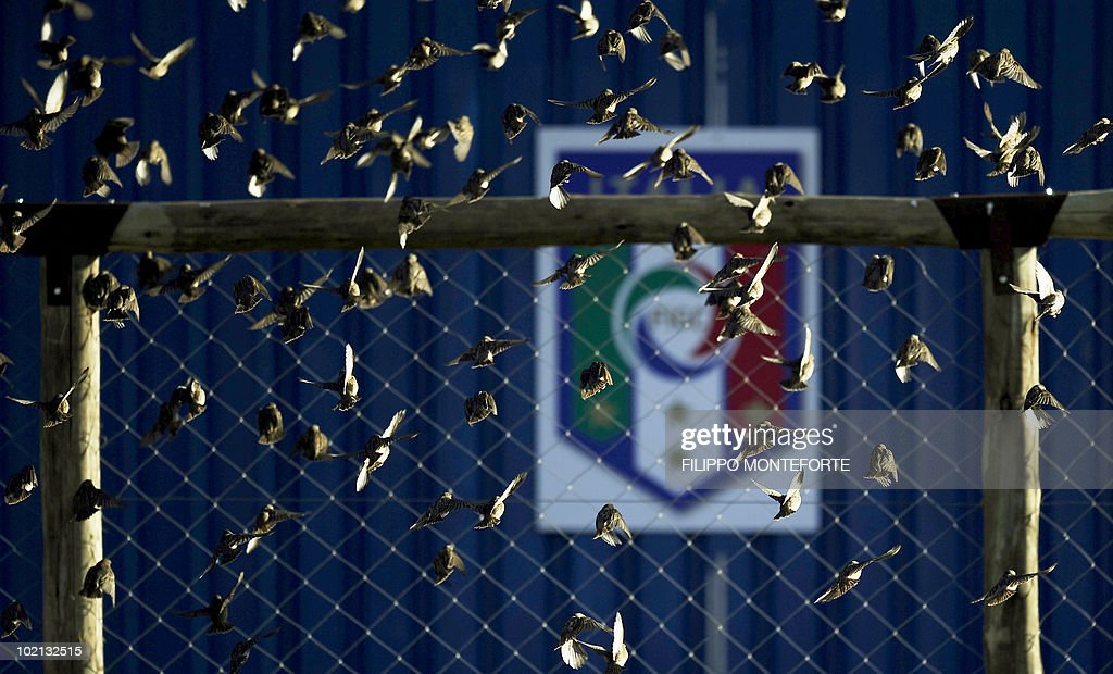 A flock of birds flies as Italy's football squad trains at Irene's Southdowns College, south of Pretoria on June 15, 2010. The 2010 World Cup hosted by South Africa continues through July 11. AFP PHOTO/Filippo MONTEFORTE