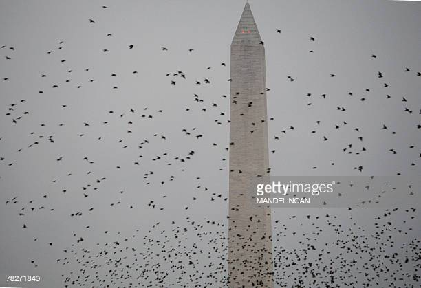 A flock of birds fly infront of the Washington Monument shortly before the return of US President George W Bush 05 December 2007 on the South Lawn of...