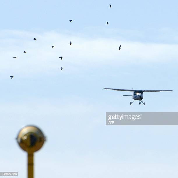 A flock of birds fly past a single engine light aircraft as it prepares to land on runway 1 the main runway usually used by the heavy aircrafts at...