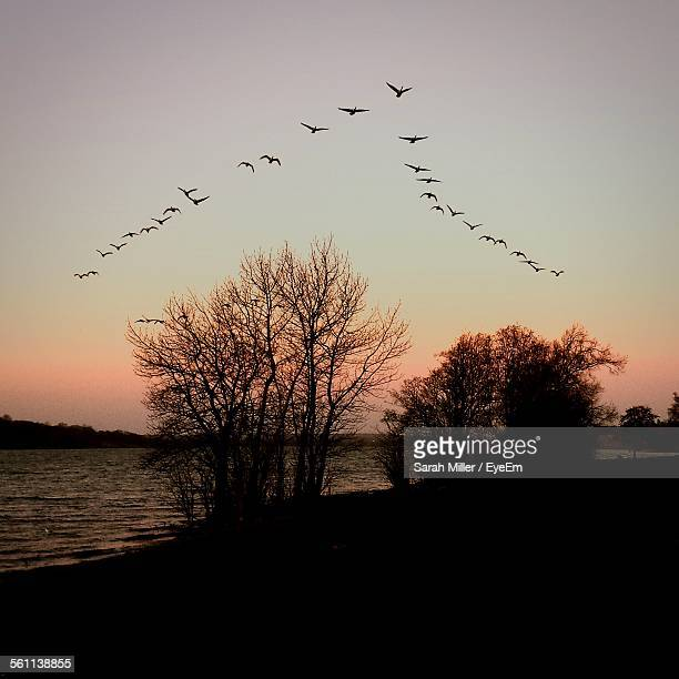 Flock Of Birds Flying At Sunset