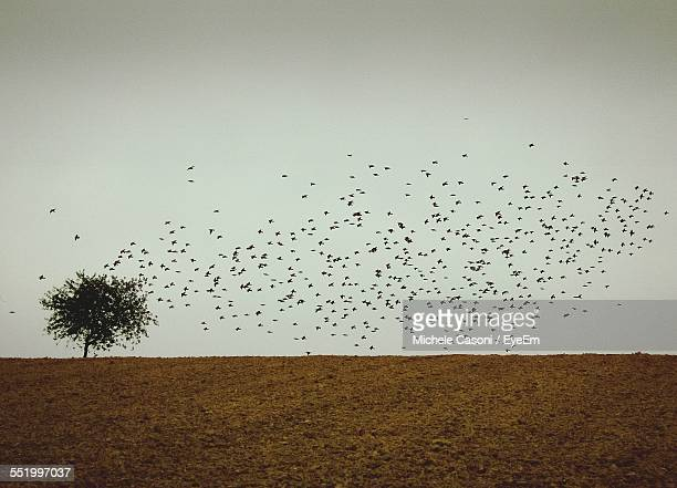 Flock Of Birds Flying During Dusk