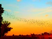 Flock Of Birds Flying Over Landscape At Sunset