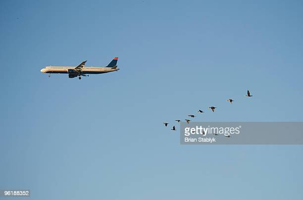 Flock of Birds Flying with Airplane