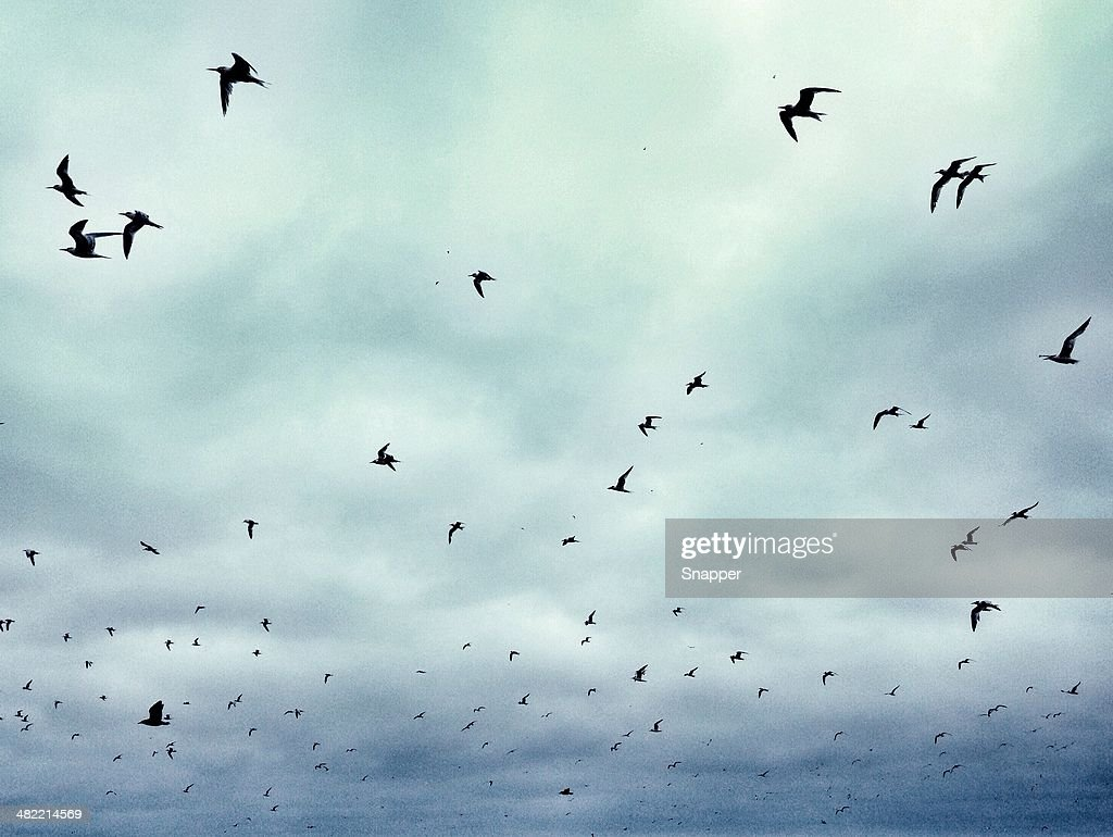 Flock of birds in sky : Stock Photo