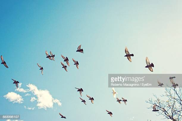 Flock Of Birds In Sky