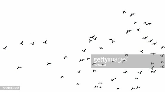 Flock of birds : Stock Photo