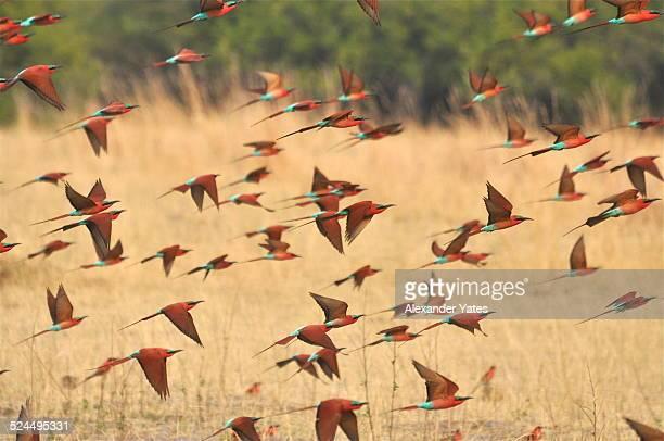 Flock of Bright Birds