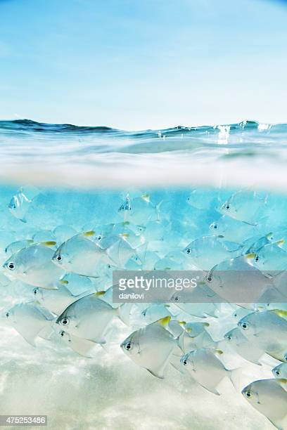 Flock of fish under and above water