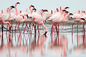 Flock of flamingoes standing in still water on beach