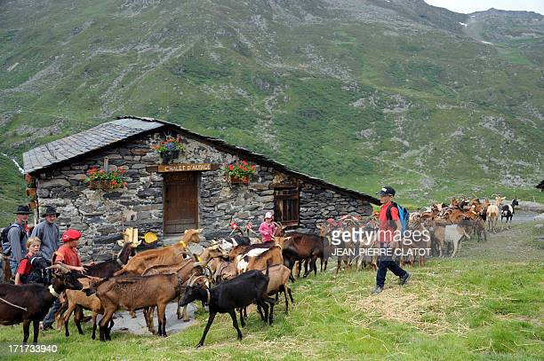 A flock of goats led by herdsmen and pupils arrive at an alpine pasture on June 28 2013 in SaintMartindeBelleville French Alps during a transhumance...